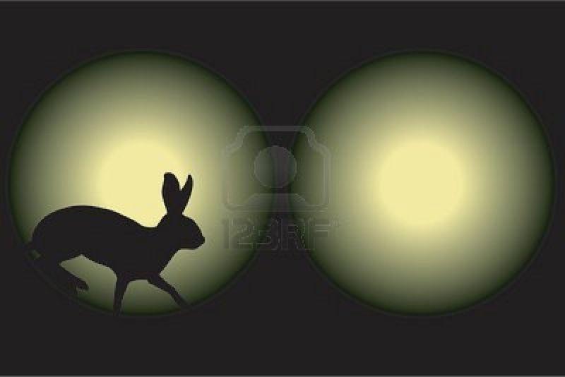1373040-vector-illustration-d-39-un-lapin-pris-dans-les-phares-de-voiture-dans-la-nuit